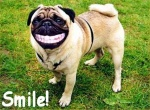 Vtc 113903 funny-dog-pictures-19 1